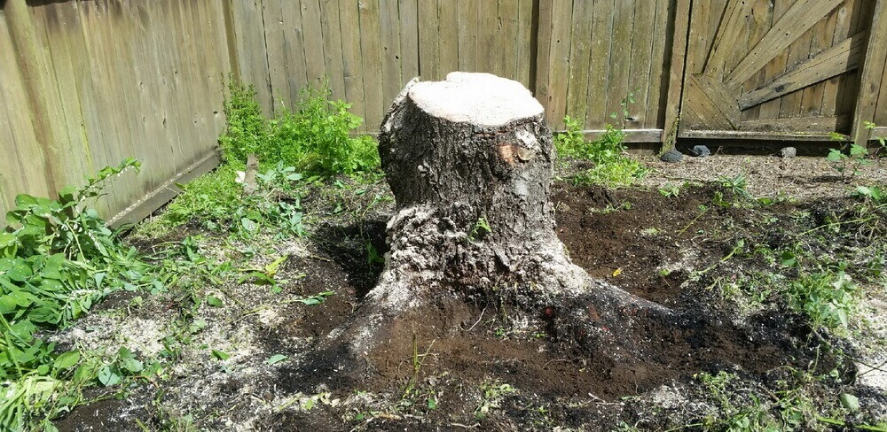Stump-Grinding-danshaplandscape-before