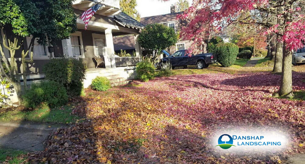 Seasonal Yard Clean Up Services in Vancouver Before
