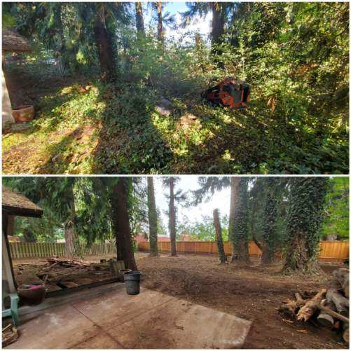 Land Clearing 3